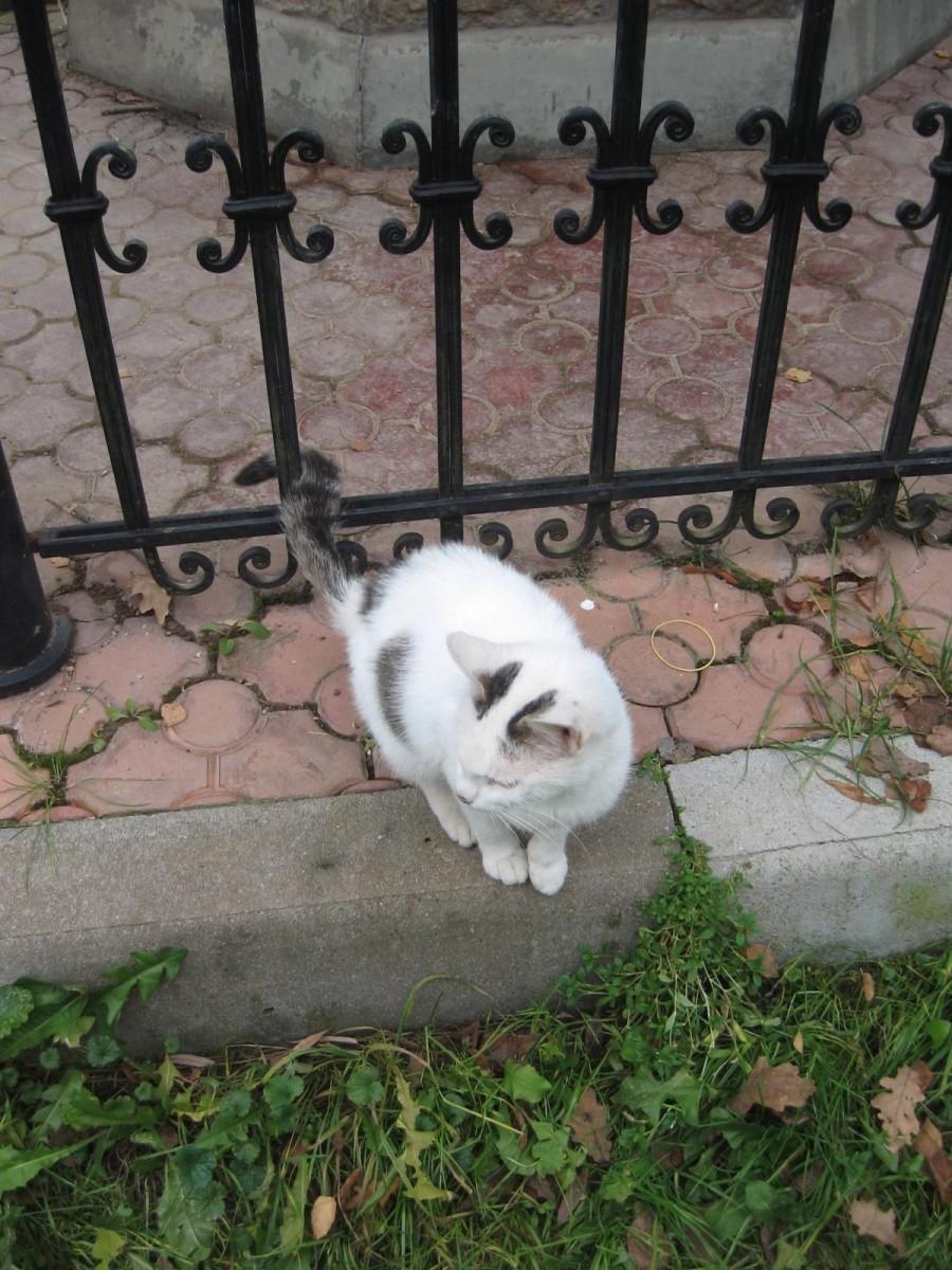 оптинский котенок