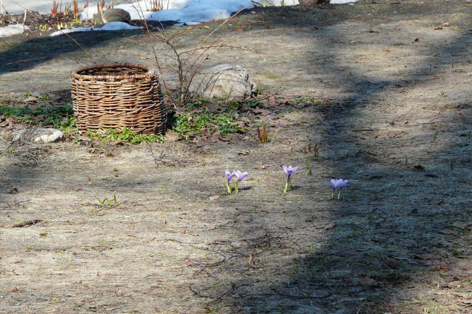 Первые робкие цветочки