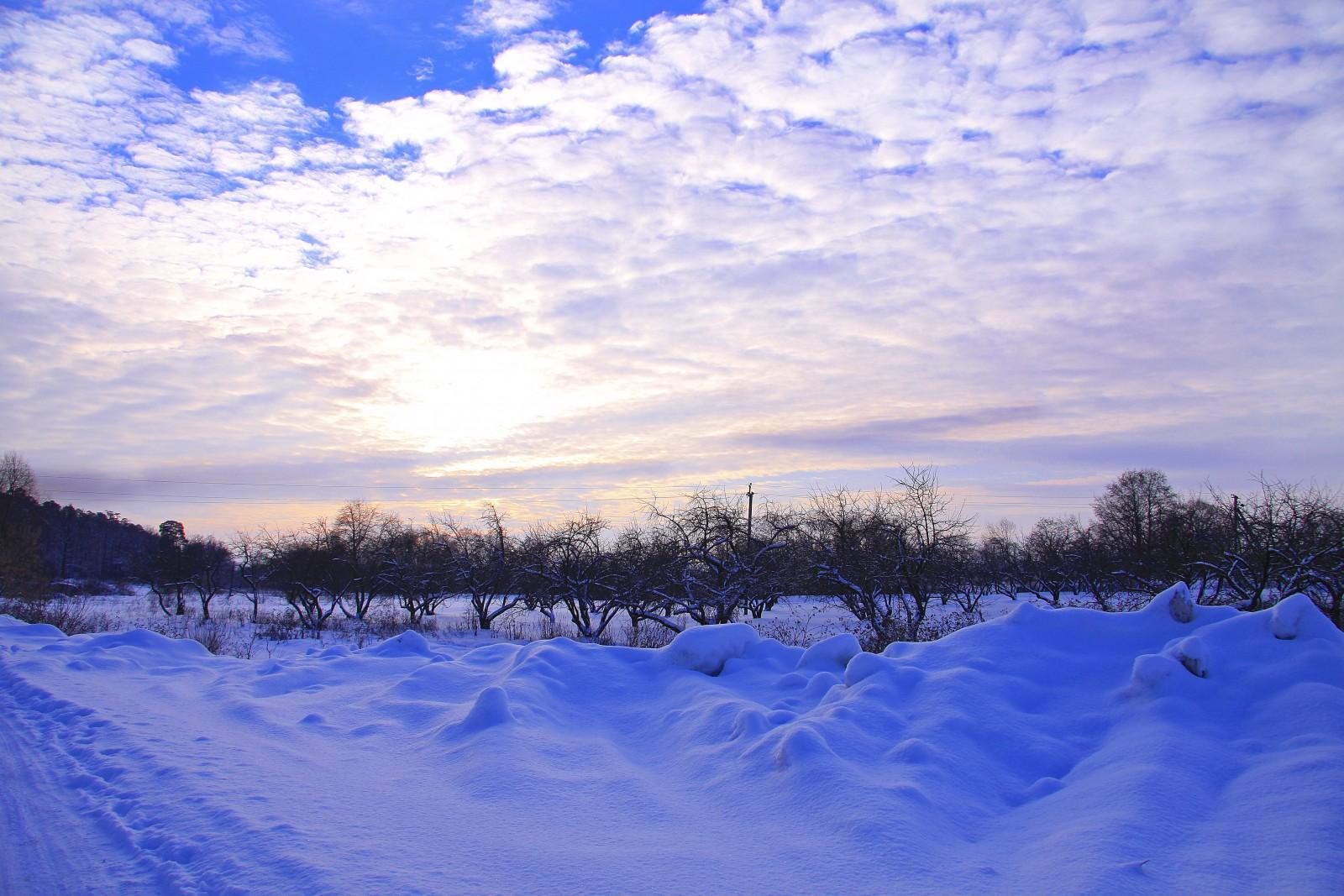Яблоневый сад у Жиздры