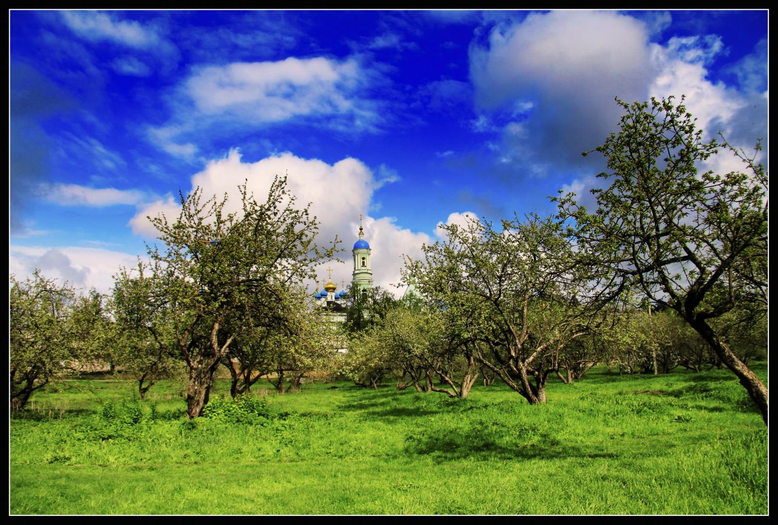 Вид на монастырь из яблочного сада