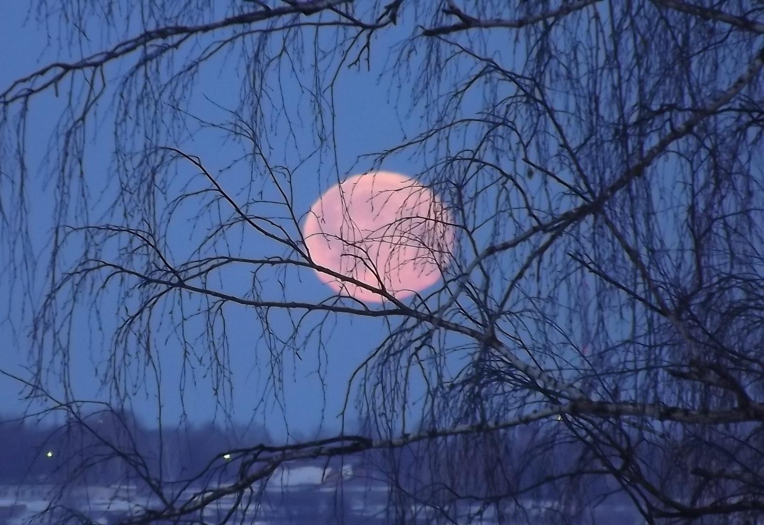 Березовый закат луны