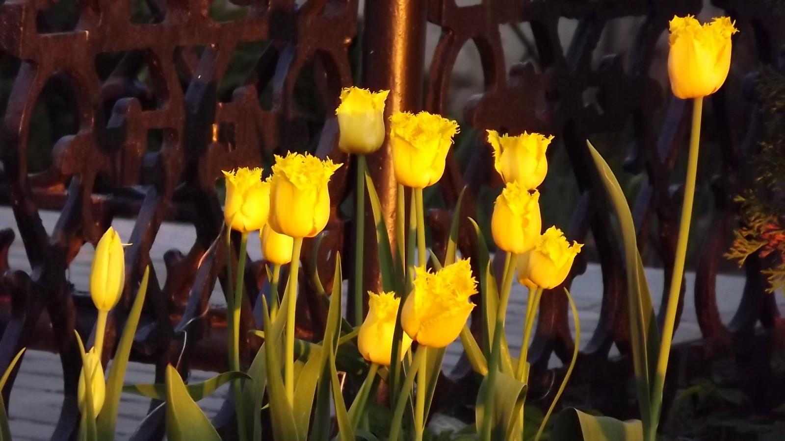 Дружина желтиков оптинских