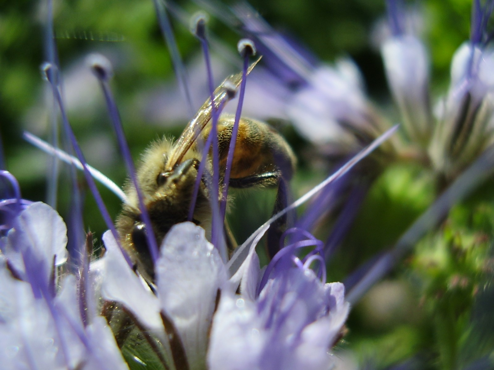 Кто пчелок обожает...