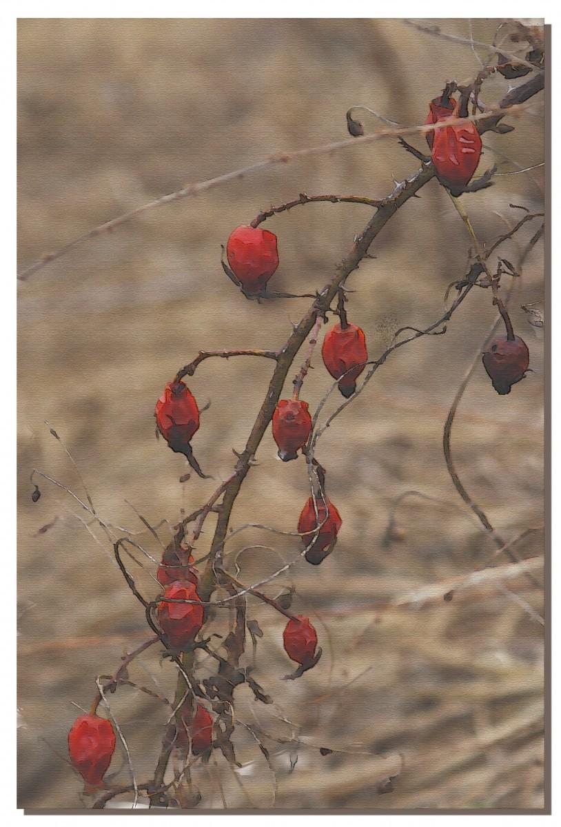 Озимый плод (15.03.14)