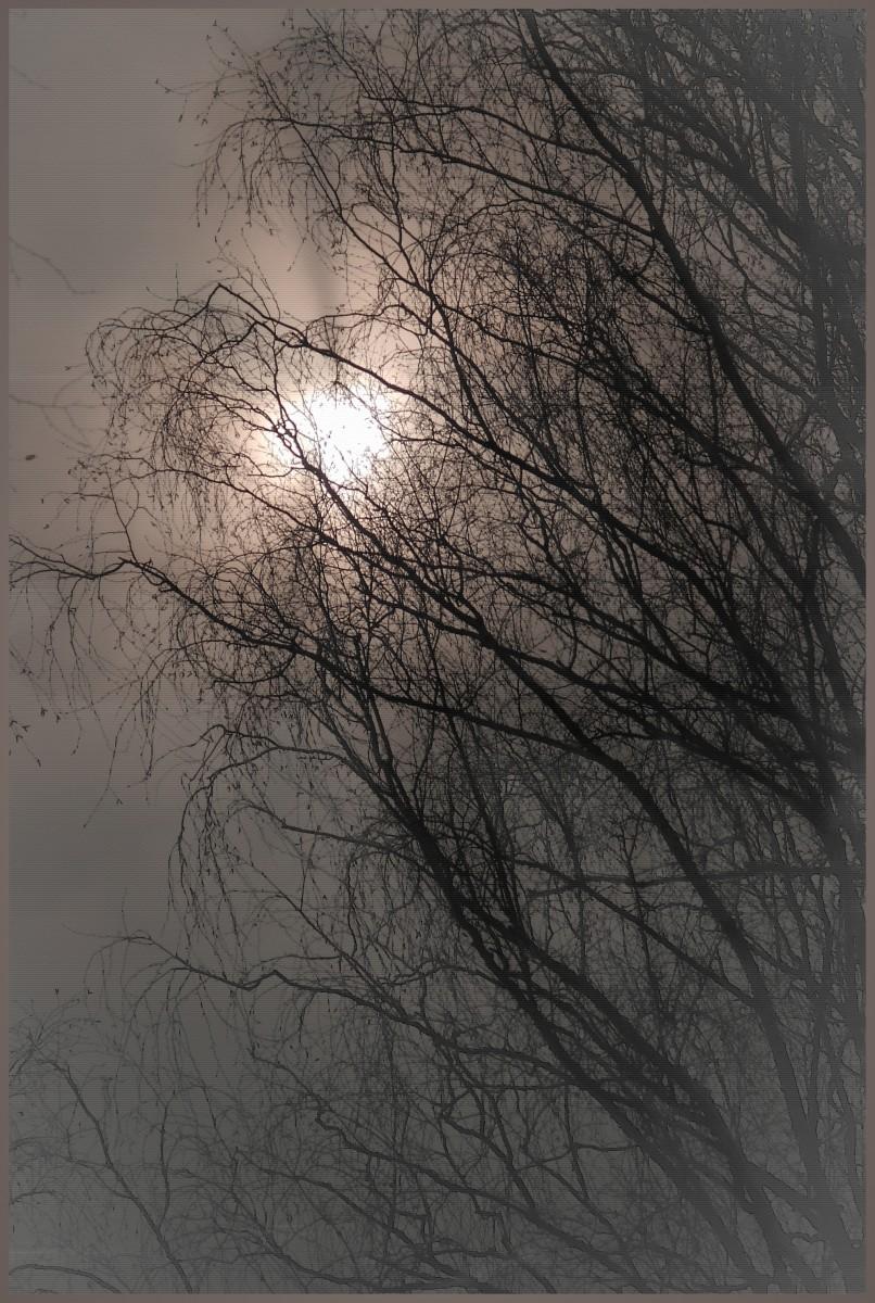 Запутавшееся в ветвях солнце (15.03.14)