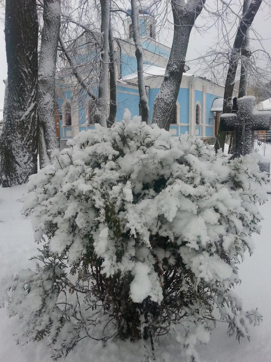 Под белым-белым покрывалом января! 11.01.2015