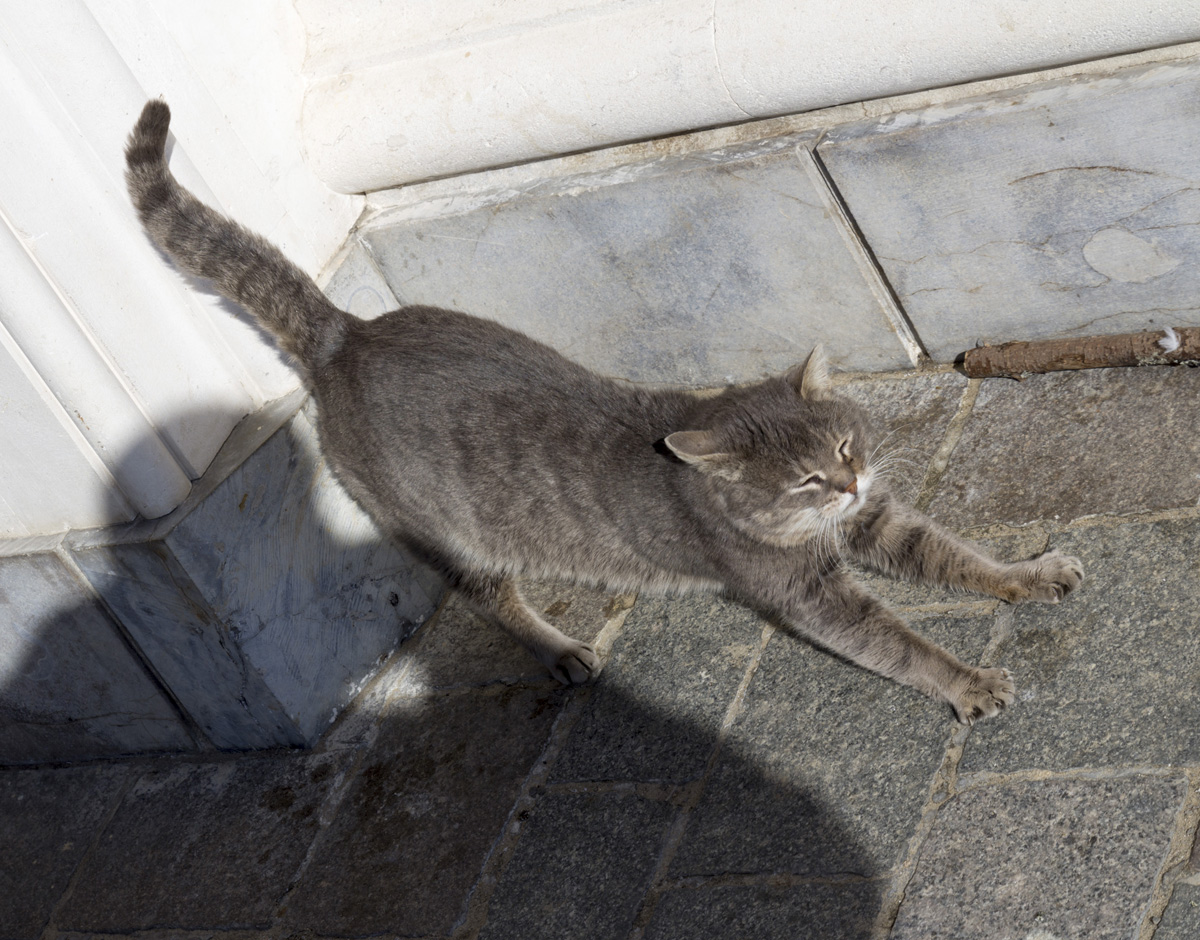 Кошка и тень...