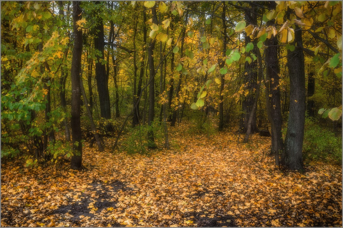 Тишина осеннего леса (снимок сделан 1 октября 2014 г.)