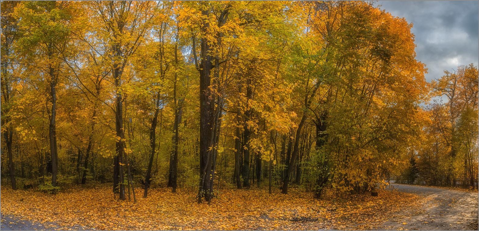 Золотая осень ( Снимок сделан 1 октября 2014 г.)