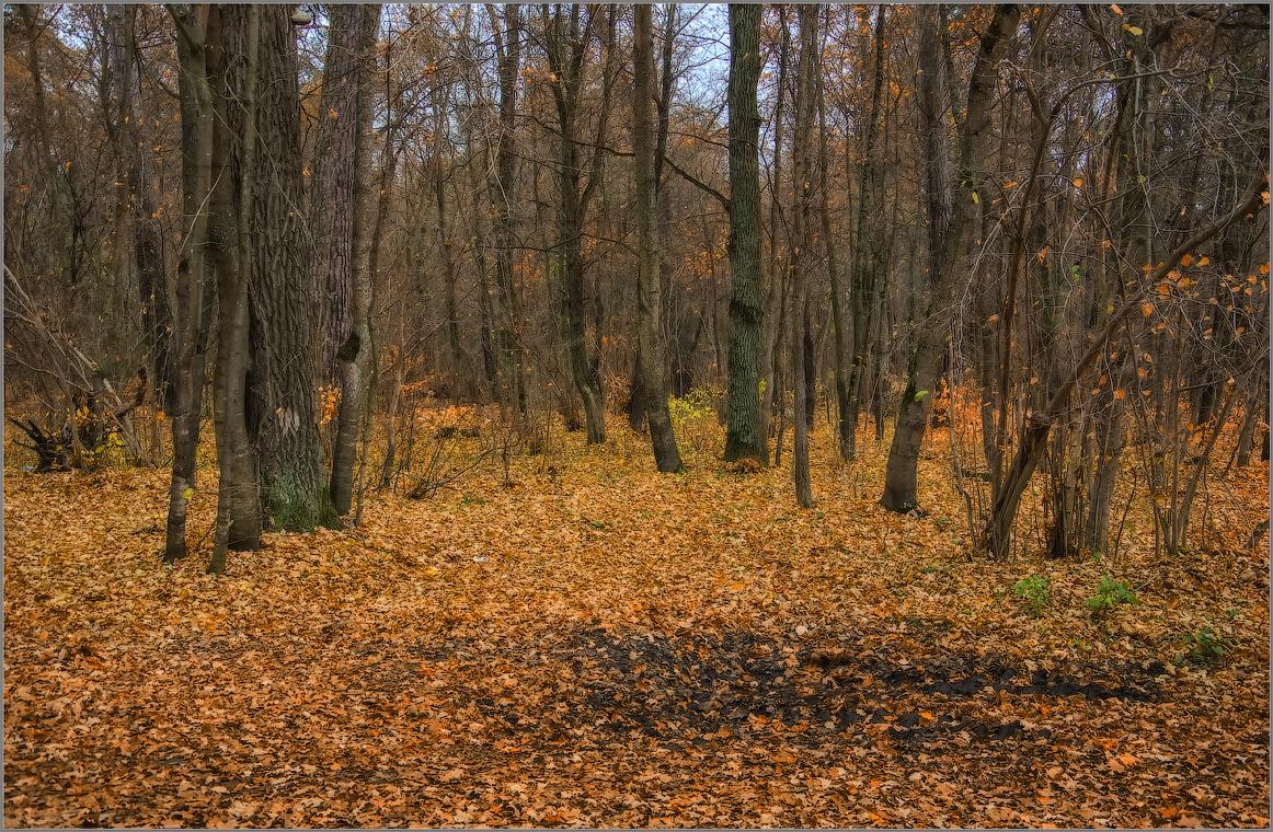 Ковер из опавшей листвы ( Снимок сделан 16 октрября 2014 г.)