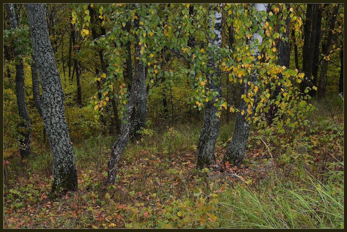 Осенний лес ( Снимок сделан 29 сентября 2013 г.)
