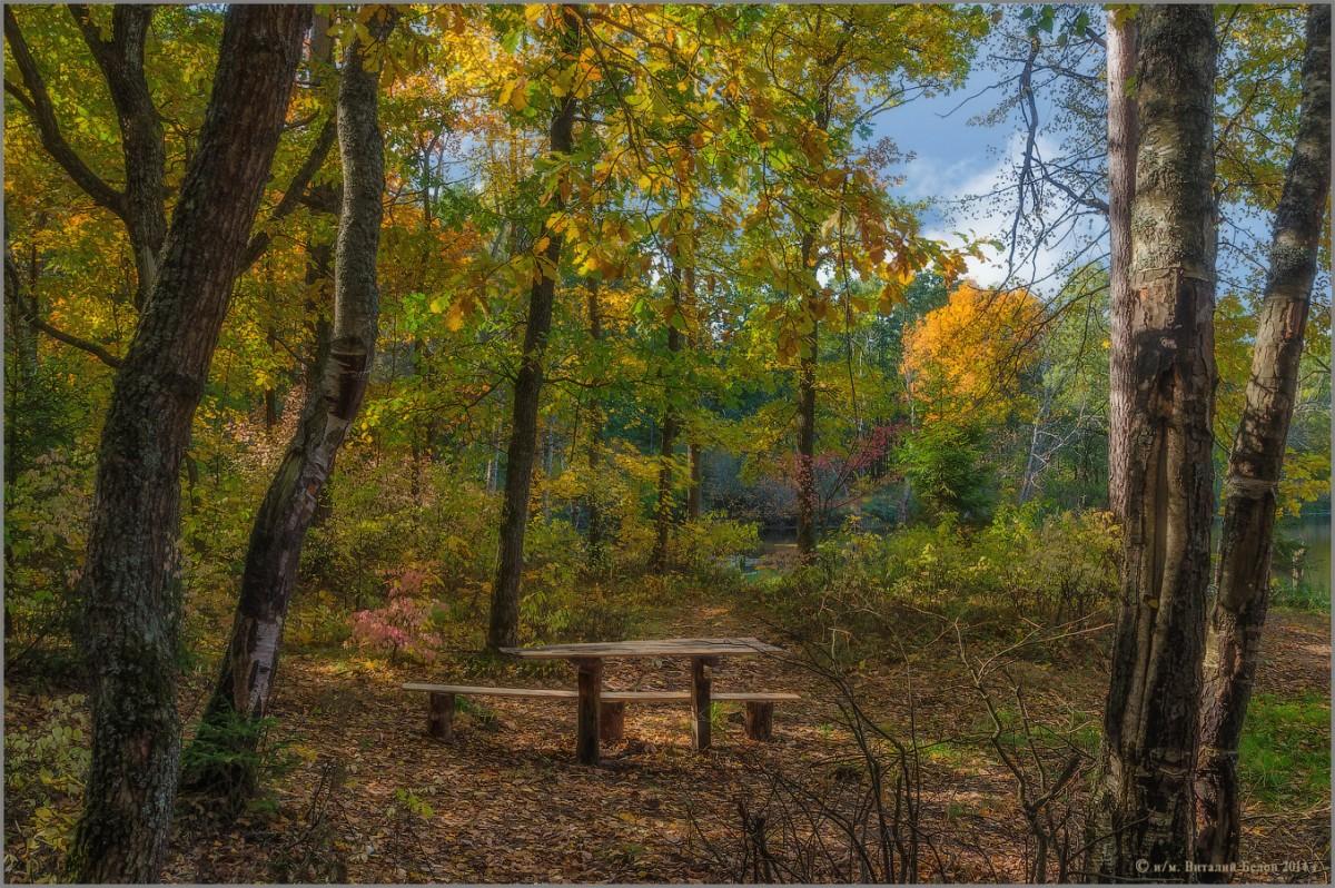 Среди осеннего леса (снимок сделан 28 сентября 2014 г.)