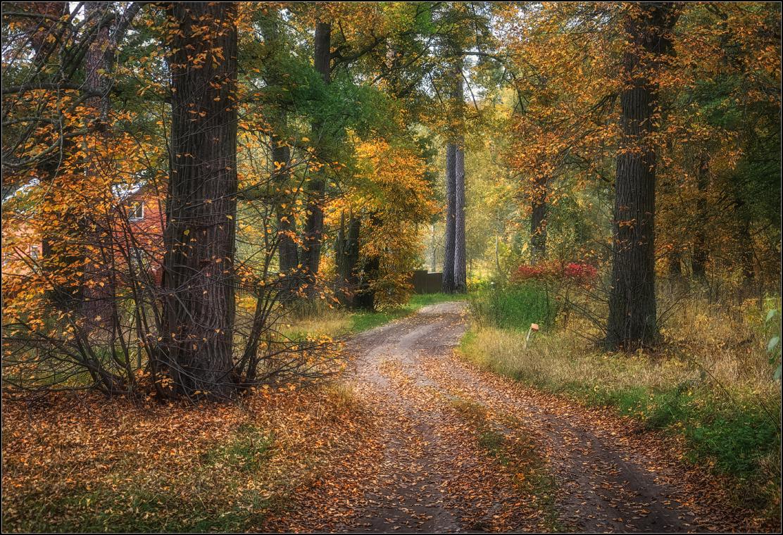 Осенними дорогами