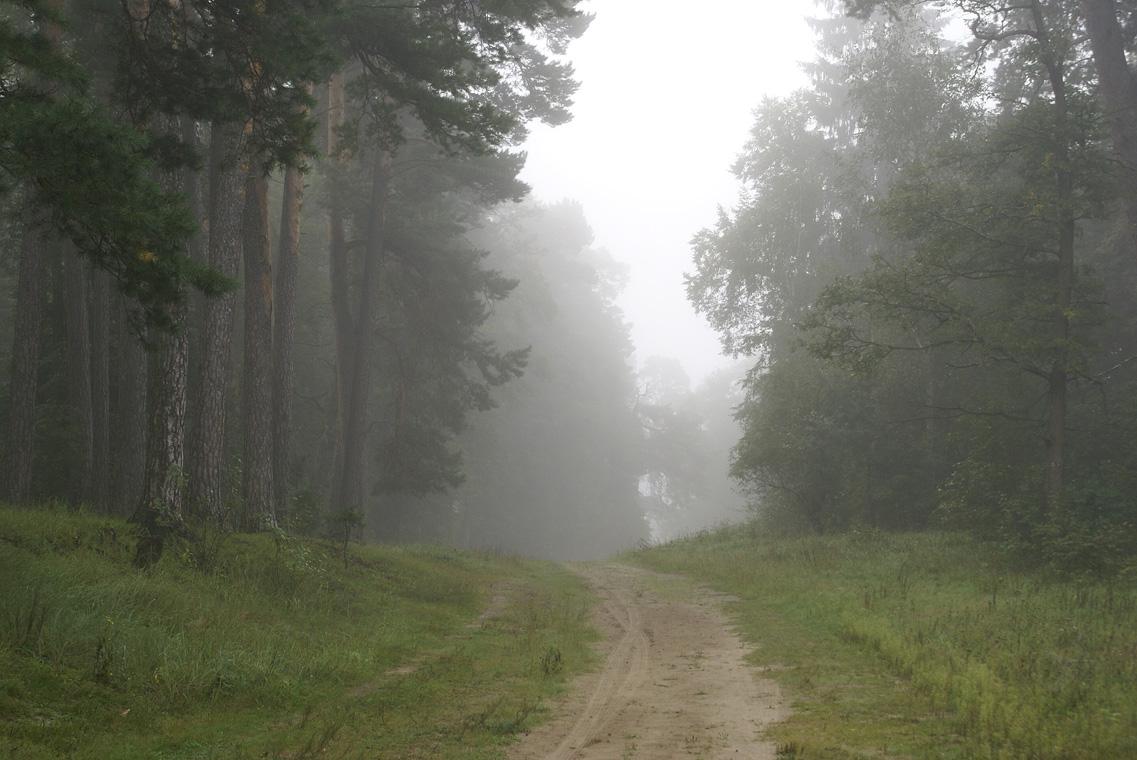 Туманное утро Воскресного дня_37 (4 сентября 2011 г.)