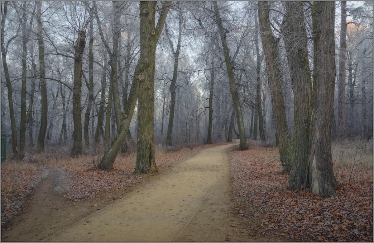 Ветхие деревья Оптинского леса (снимок сделан 27 ноября 2014 г.)