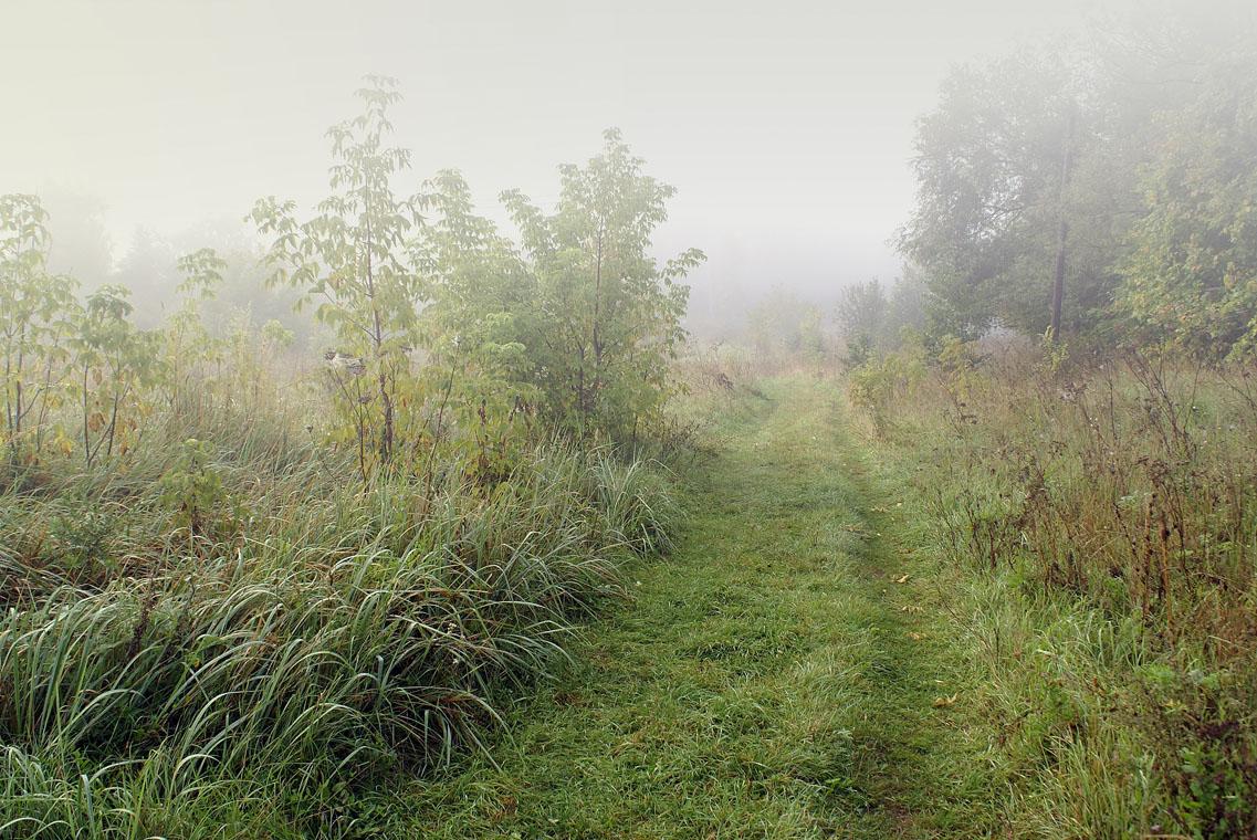 Тропинка вдоль речки Жиздры  (4 сентября 2011 г.)