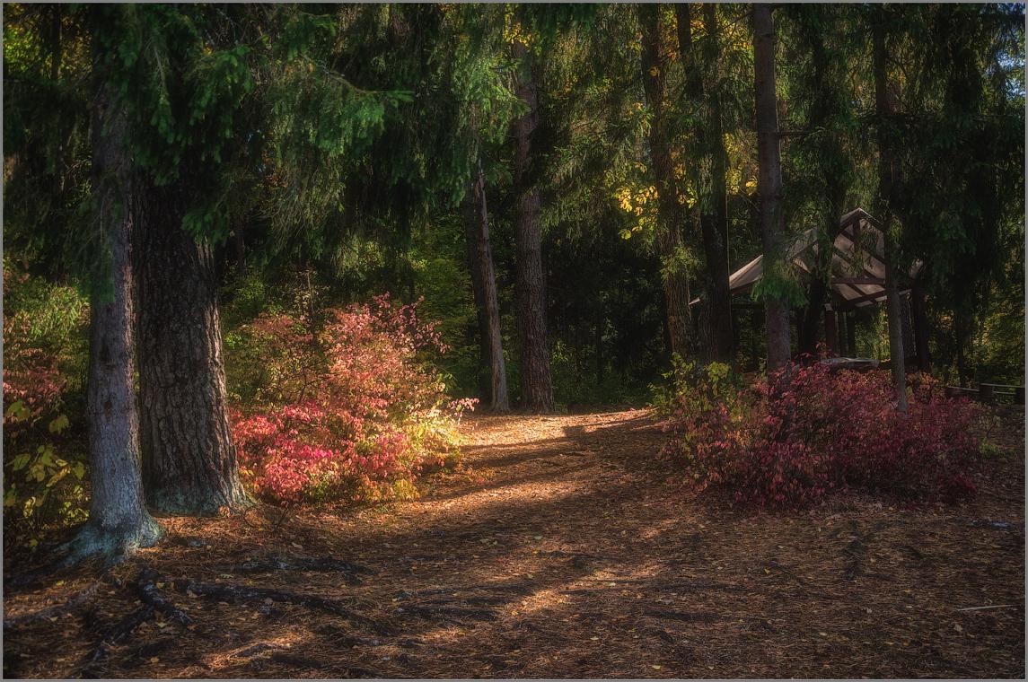 В еловом лесу (снимок сделан 28 сентября 2014 г.)