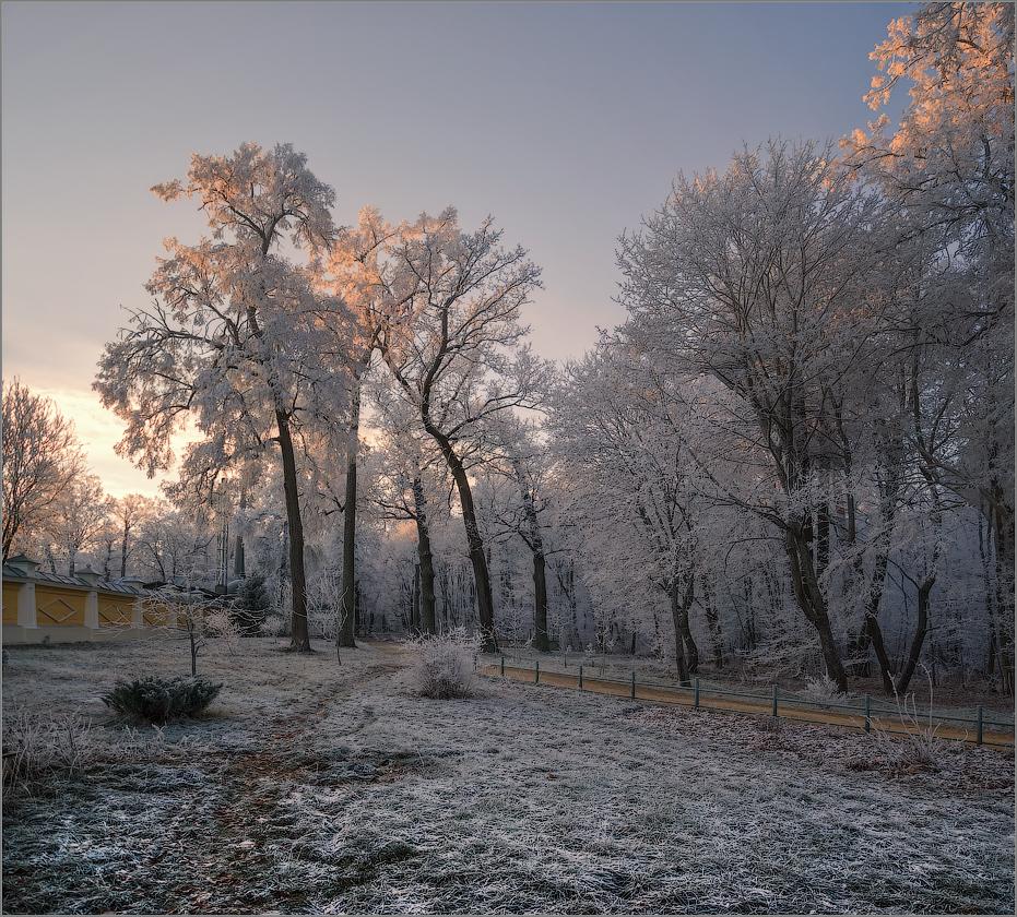 Украшенные инеем (снимок сделан 27 ноября 2014 г.)