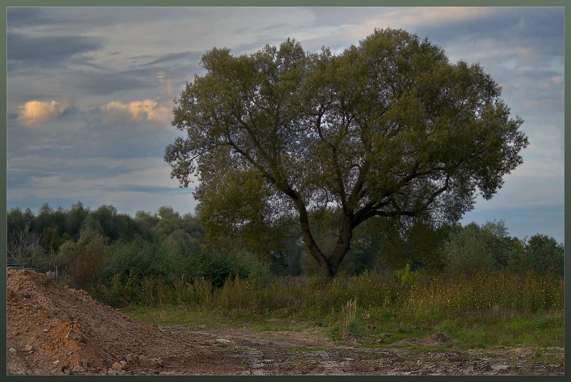 Одинокое дерево ( 11 сентября 2012 г.)
