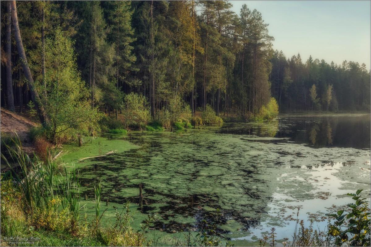 Цветущее озеро (снимок сделан 3 октября 2016 г.)