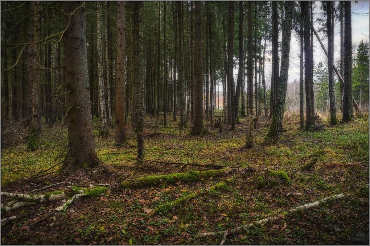 На лесной окраине (снимок сделан 10 ноября 2012 г.)