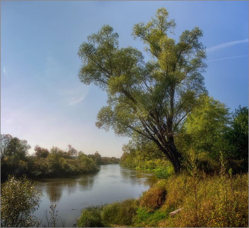 Большое дерево у реки (снимок сделан 11 сентября 2014 г.)