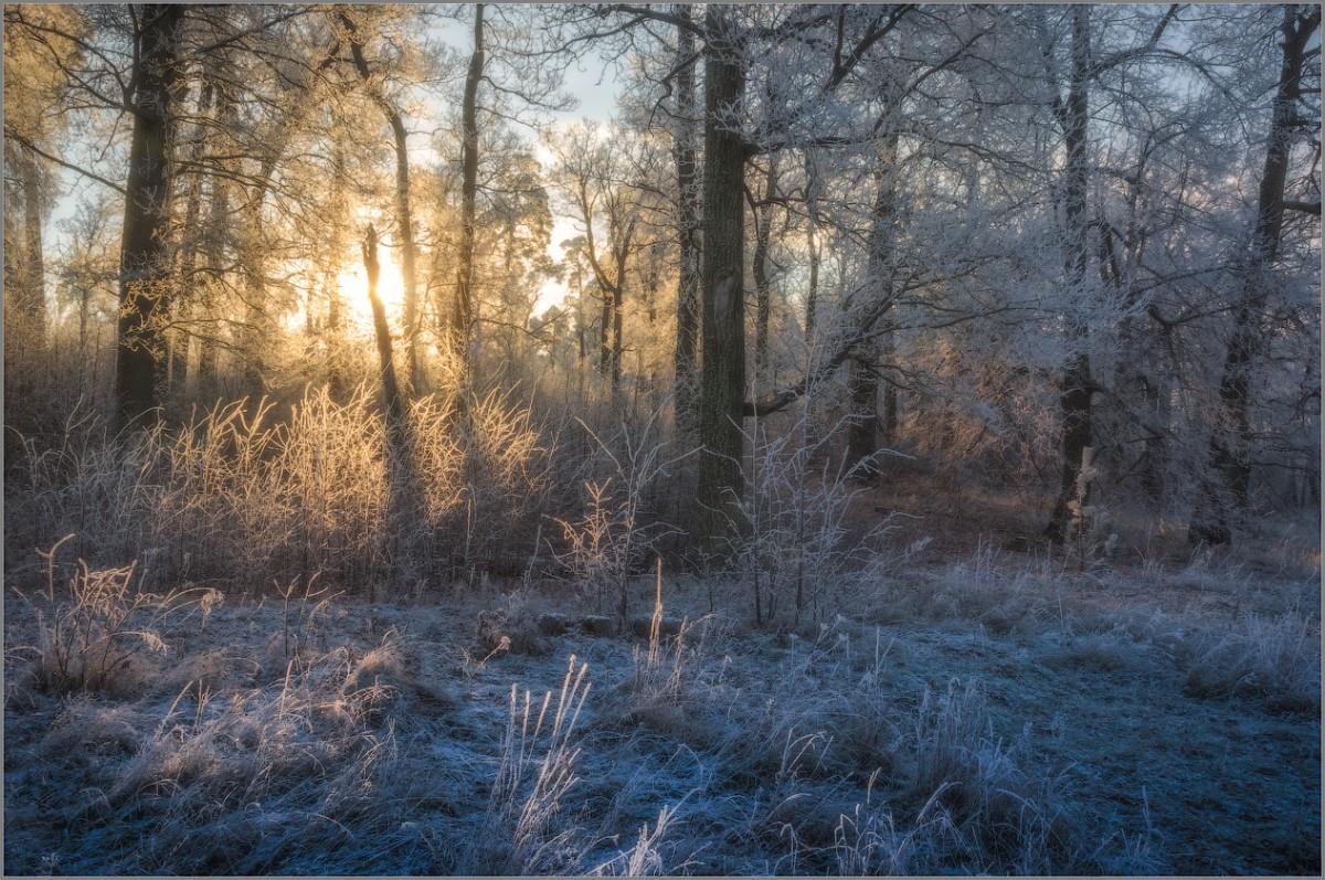 Преображенный светом лес (снимок сделан 27 ноября 2014 г.)