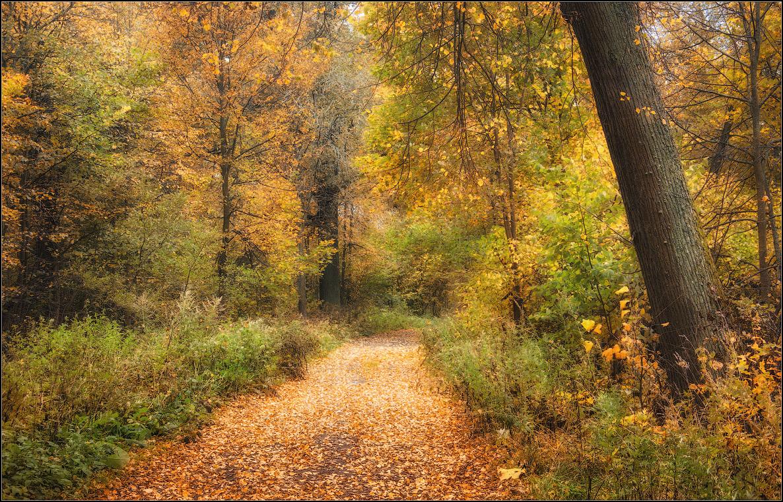 Осень в разгаре ( Снимок сделан 19 сентября 2013 г.)
