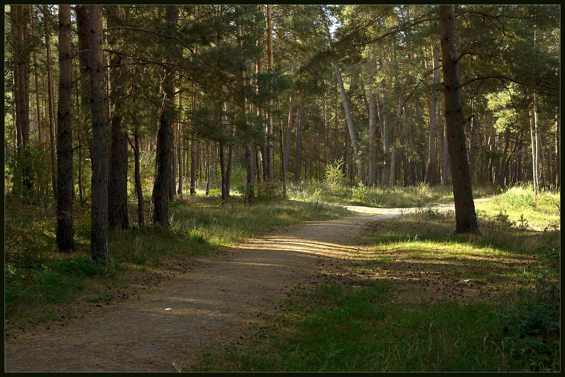Дорога в сосновом лесу ( 21 сентября 2012 г.)