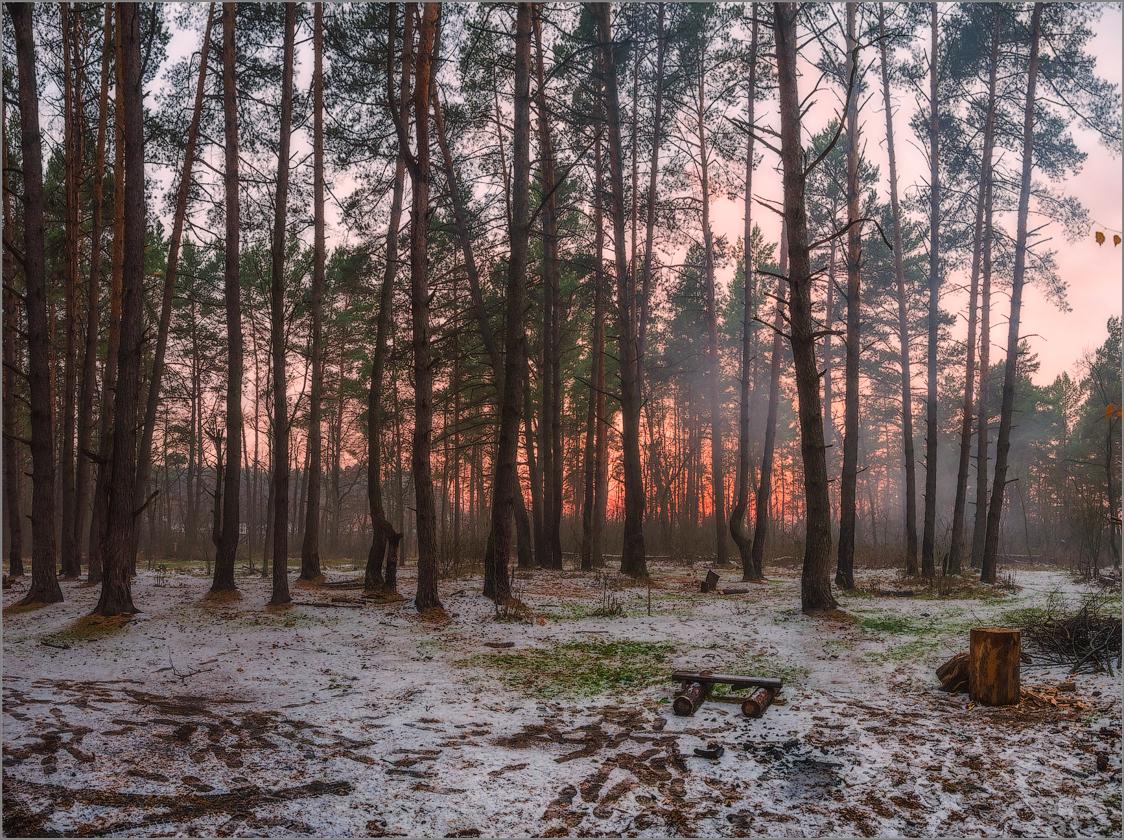 Лесной закат (снимок сделан 4 ноября 2014 г.)