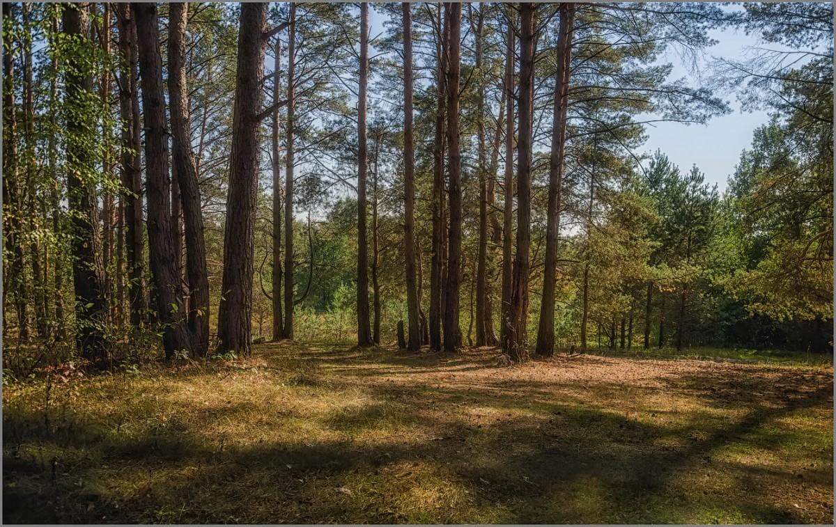 На лесной полянке (снимок сделан 11 сентября 2014 г.)