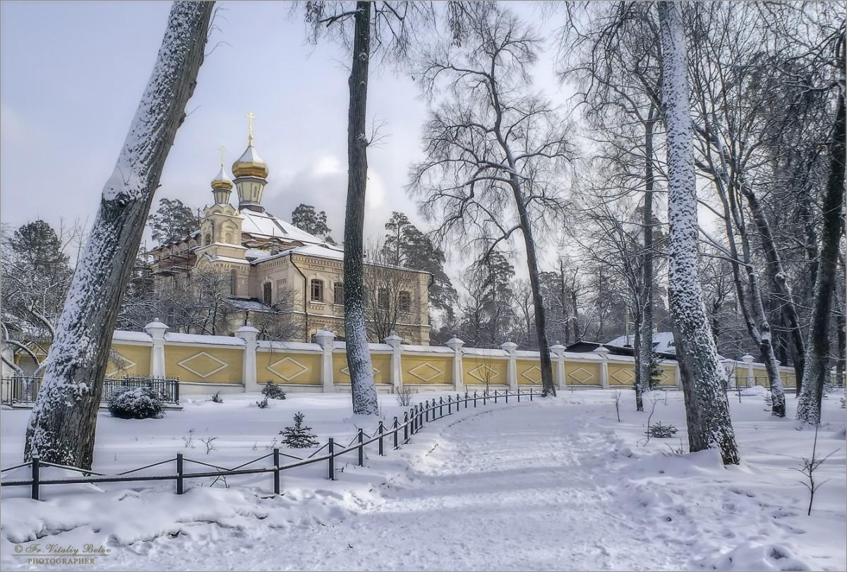 Запорошенный снегом (снимок сделан 12 февраля 2012 г.)