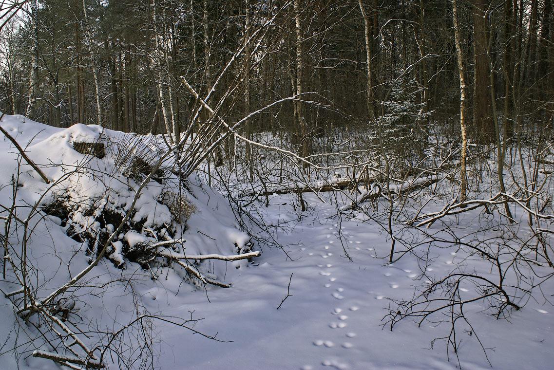 Следы на снегу (12 февраля 2012 г.)
