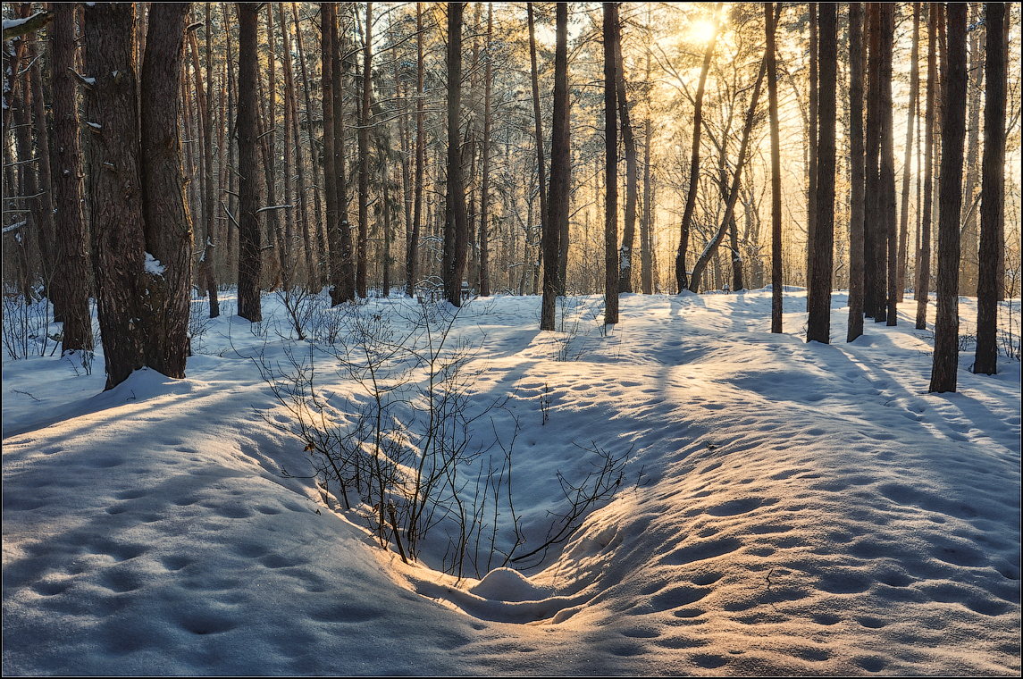 В лесу объятом светом ( Снимок сделан 15 января 2013 г.)