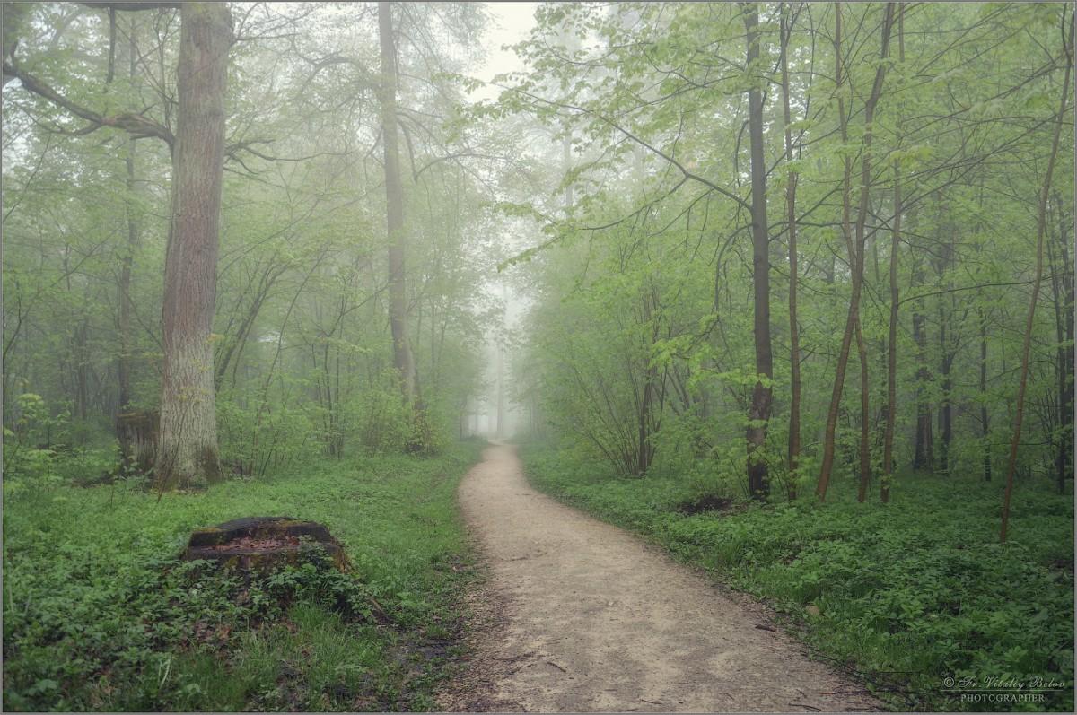 Безмолвие утреннего леса (снимок сделан 6 мая 2012 г.)