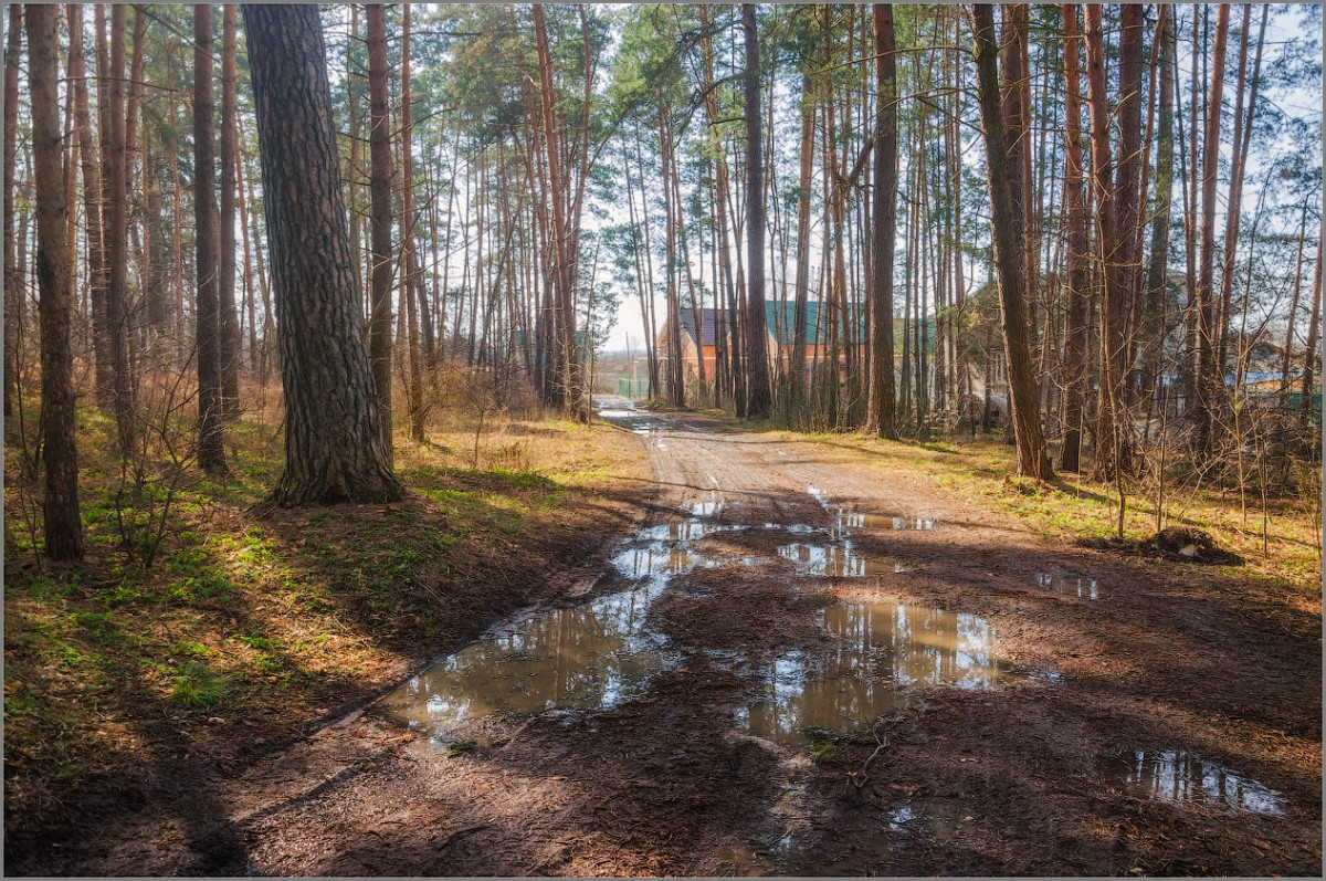 Весна на лесной окраине (снимок сделан 22 марта 2014 г.)