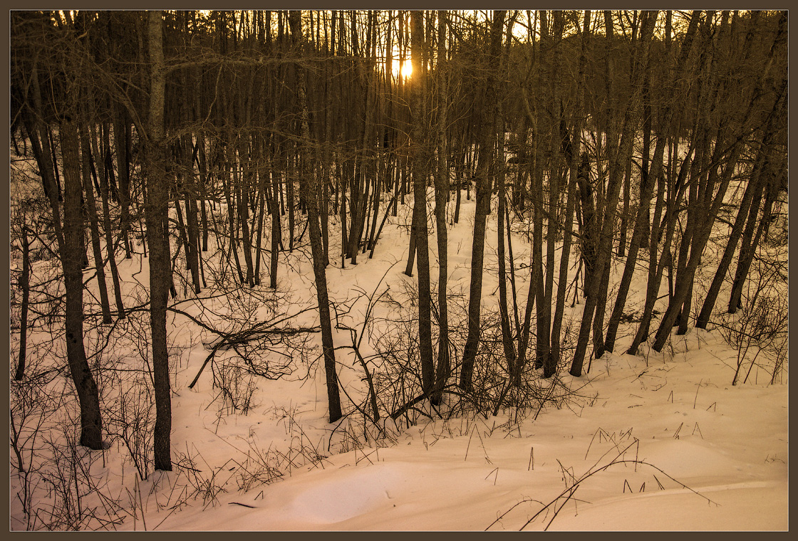 Овражный лес ( 10 марта 2013 г.)