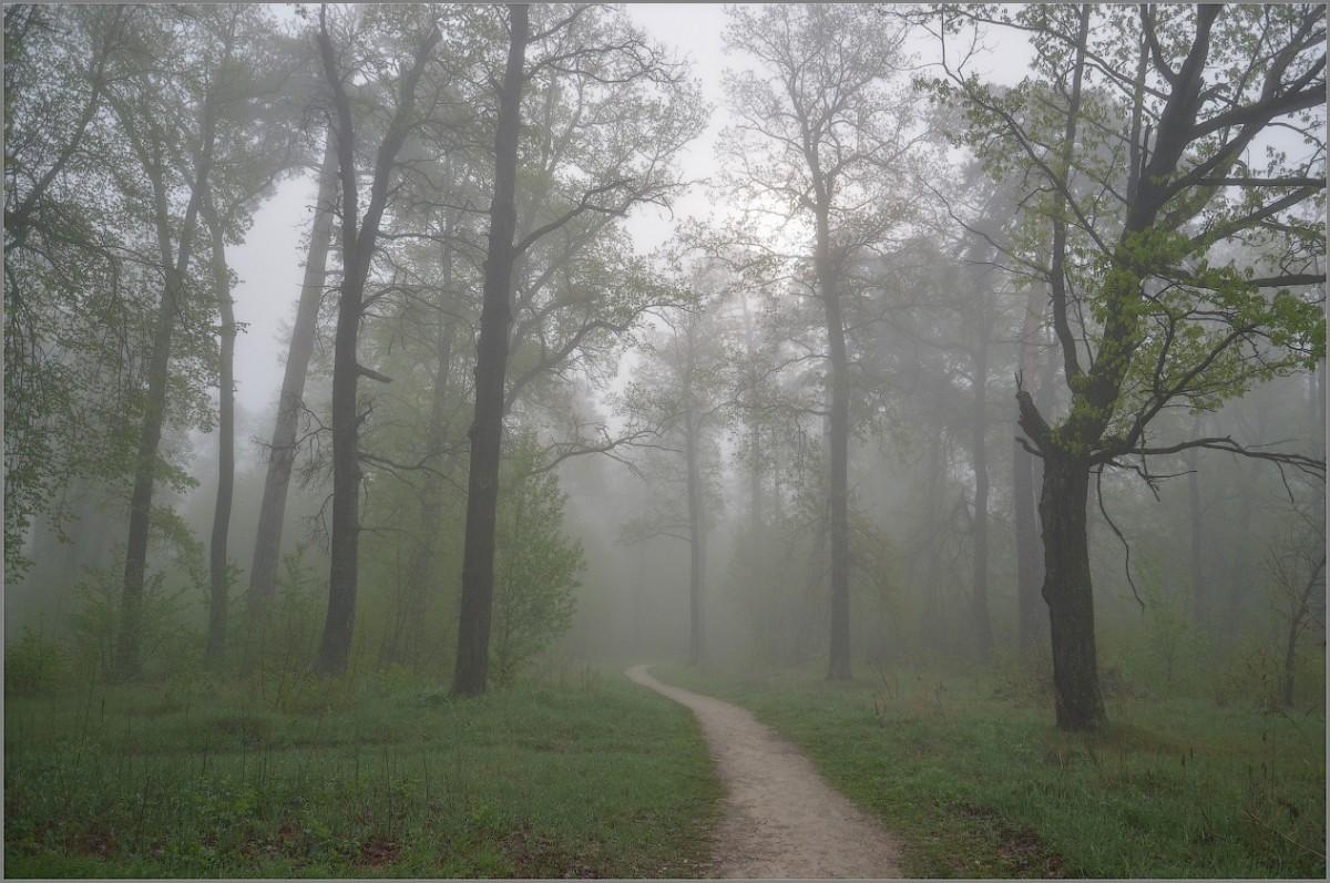 Весенними туманами (снимок сделан 6 мая 2012 г.)