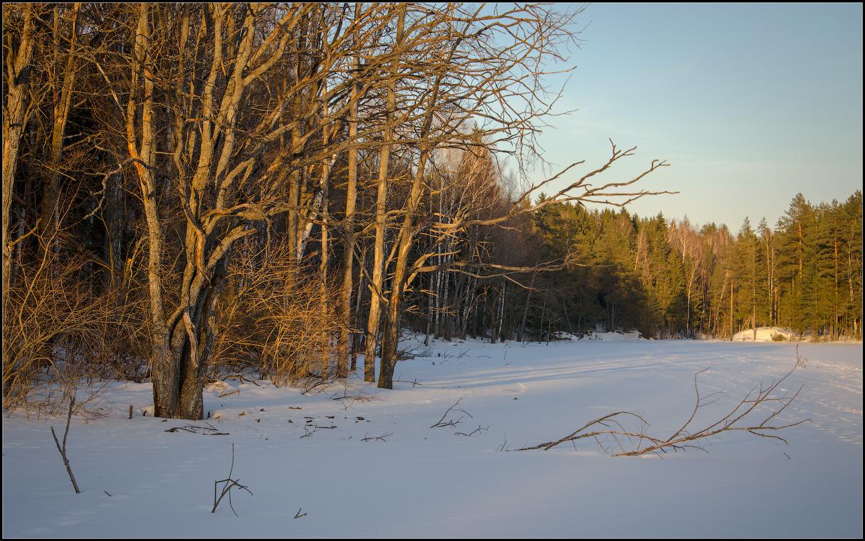 Лес объятый теплым светом ( 10 марта 2013 г.)