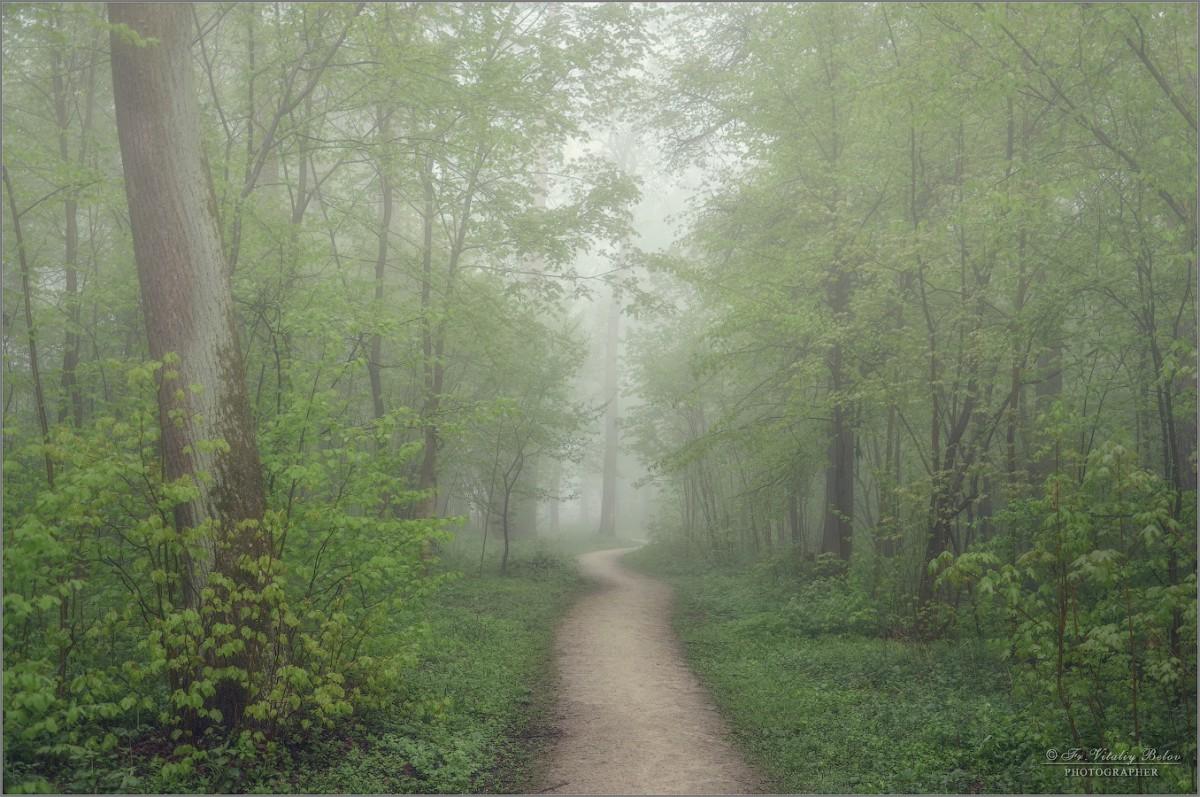 Тропинка змейкой в лес туманный... (снимок сделан 6 мая 2012 г.)