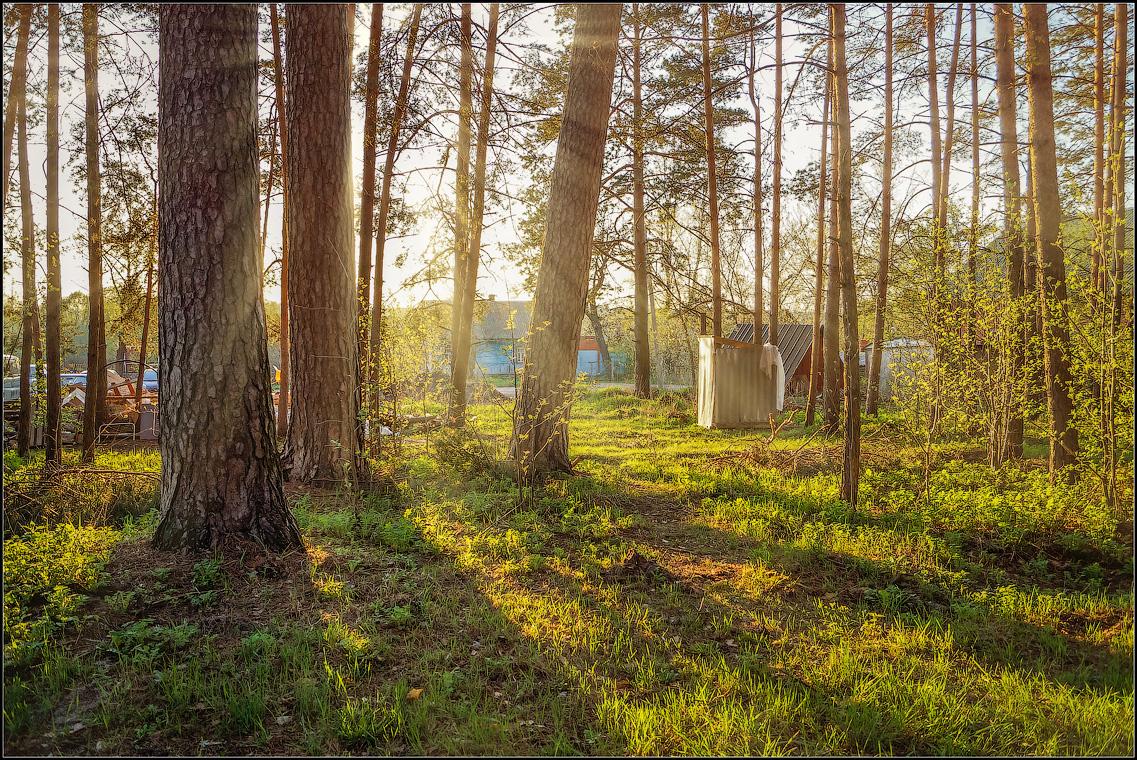 На лесной окраине ( 5 мая 2013 г.)