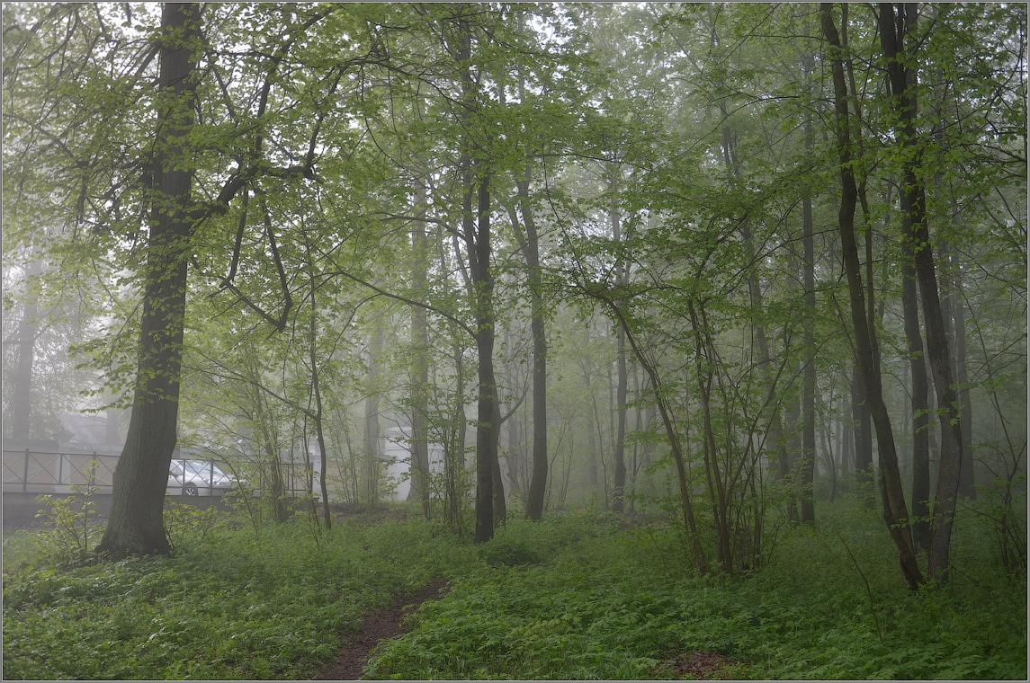 В прозрачной дымке тумана ( Снимок сделан 6 мая 2012 г.)