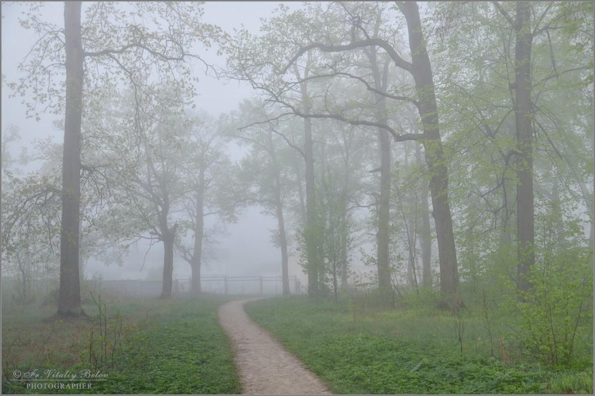 Весенний лес окутанный туманом (снимок сделан 6 мая 2012 г.)
