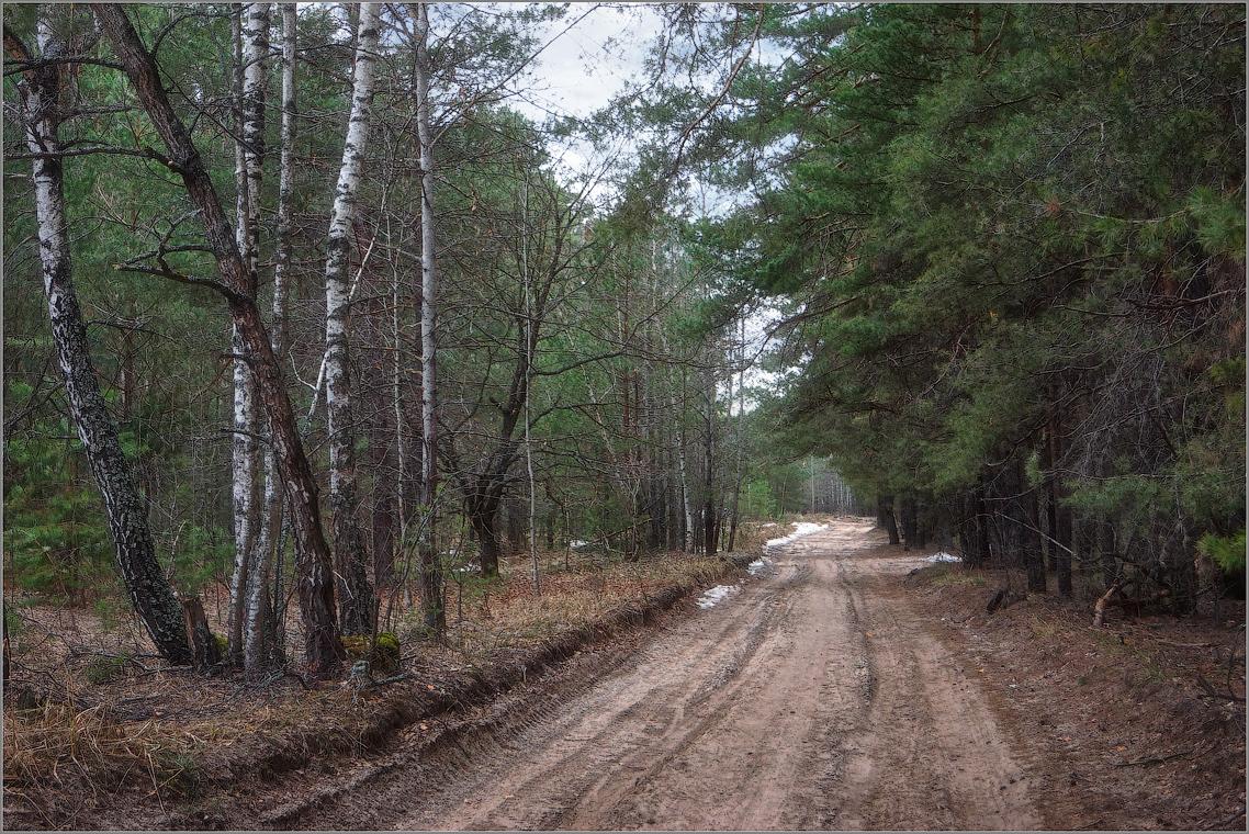 Весенний лес ( Снимок сделан 21 апреля 2013 г.)