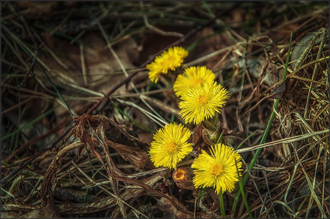 Признаки весны ( Снимок сделан 22 марта 2014 г.)
