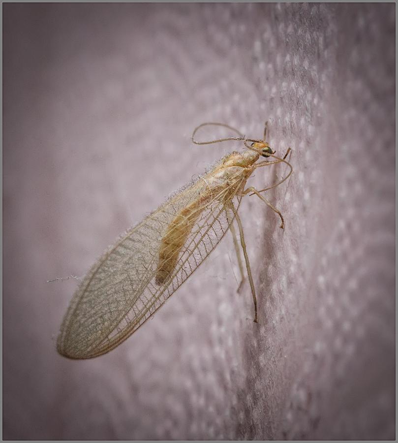 Высохшее насекомое найденное на стене и покрытое пылью (снимок сделан 30 апреля 2015 г.)