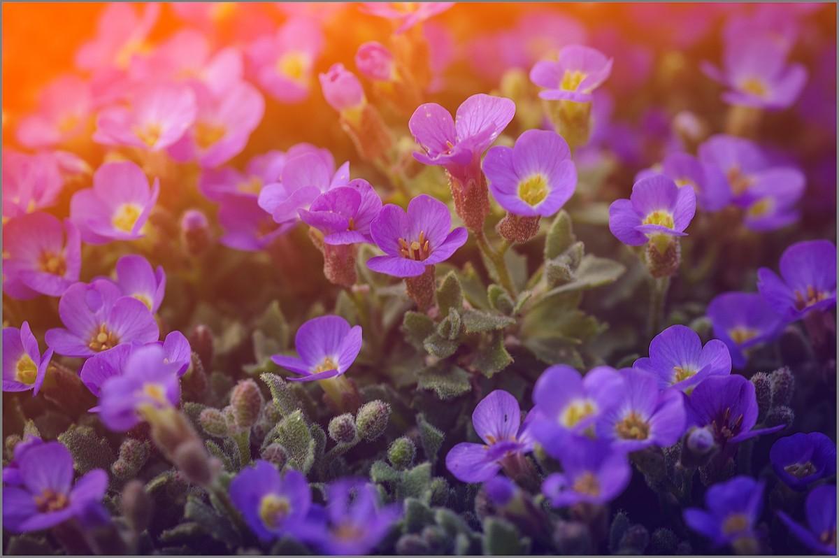Цветочные фантазии_2 (снимок сделан 10 мая 2015 г.)