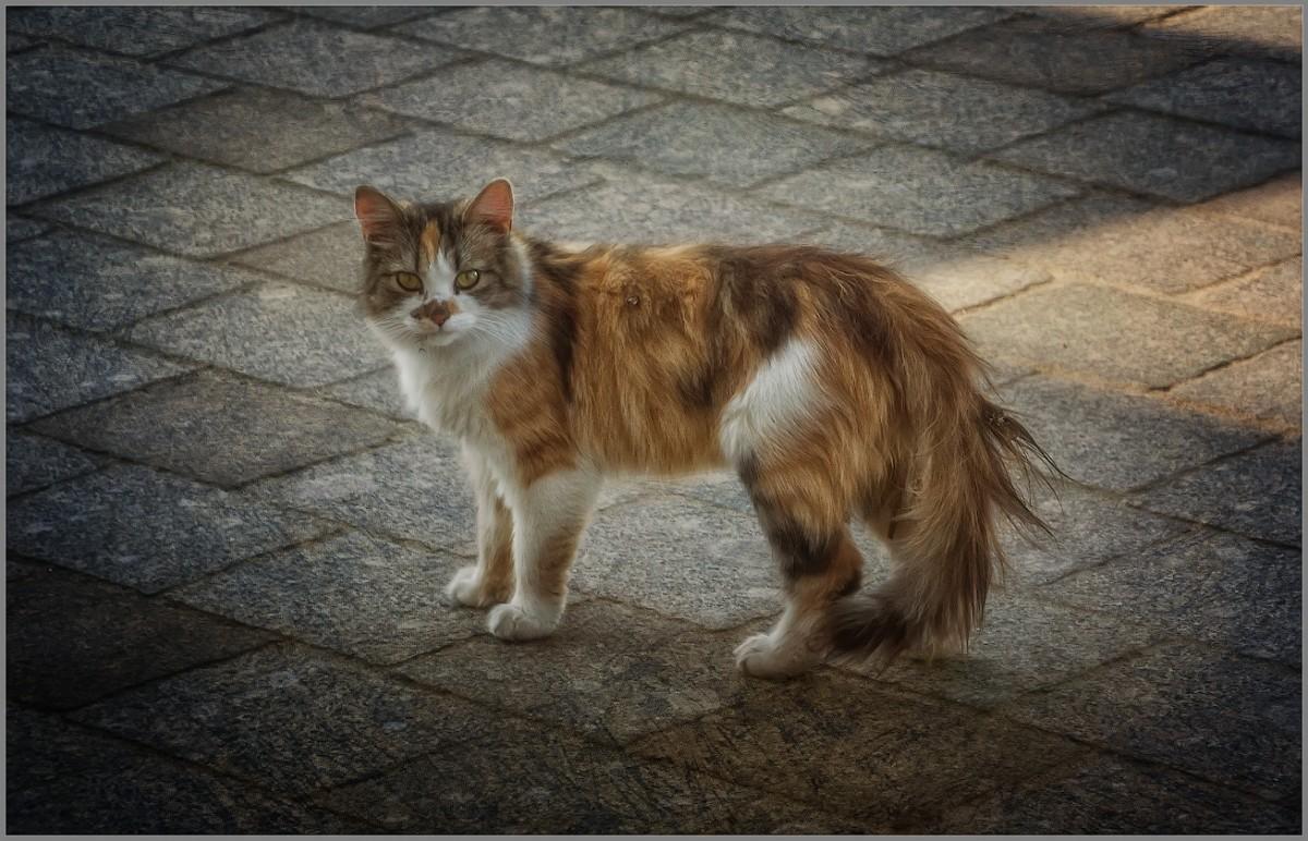 Бездомная кошка (снимок сделан 11 сентября 2014 г.)