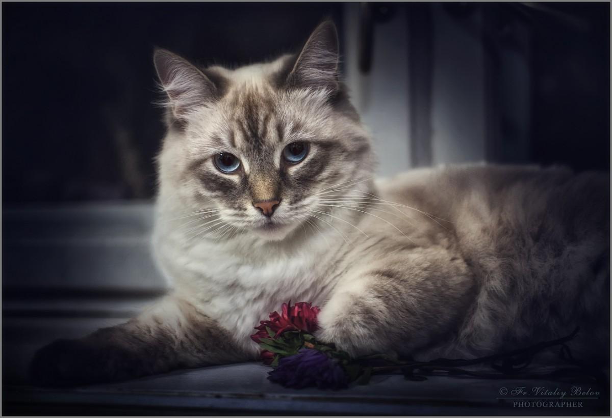 Мне котофей цветочки подарил... (снимок сделан 27 сентября 2012 г.)