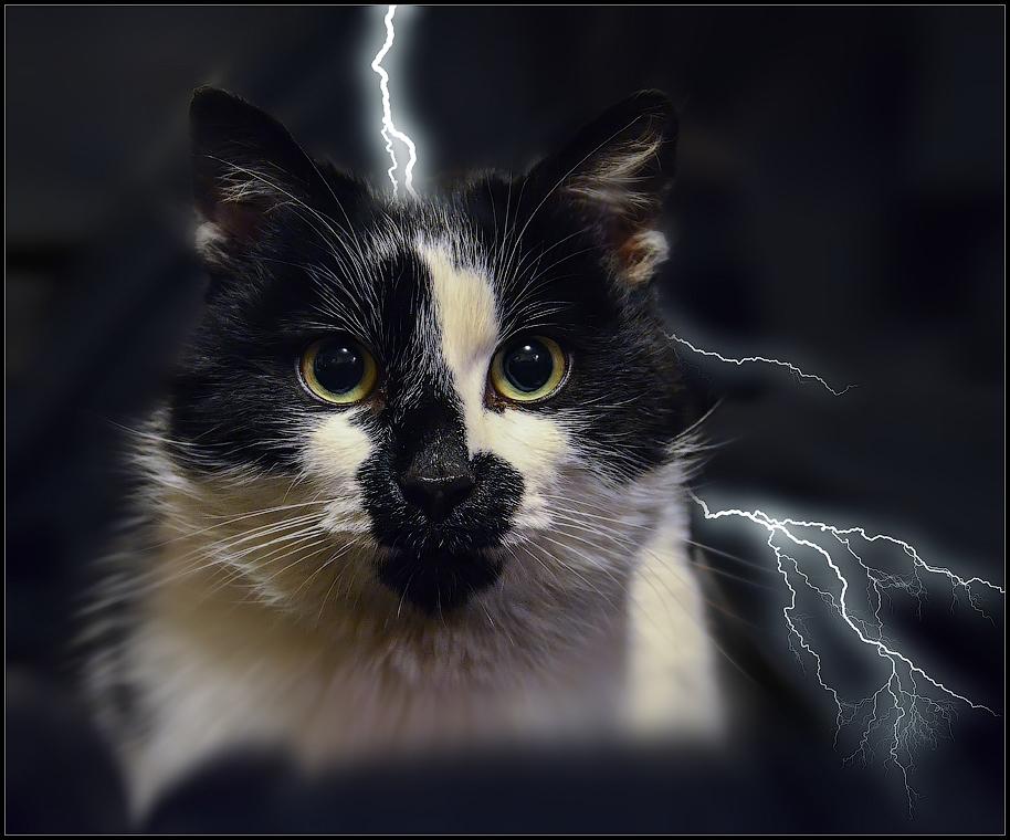 Грозовой кот ( Снимок сделан 26 января 2013 г.)